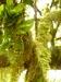 La Gomera - Natur