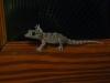 La Gomera - Tierwelt